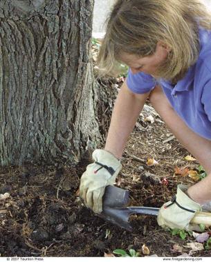 Planting Under A Tree Finegardening