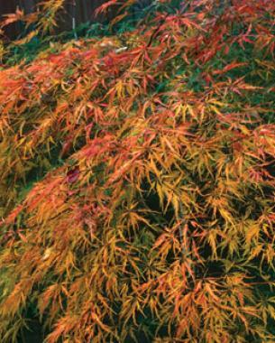 'Waterfall' in autumn