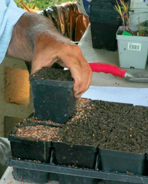 Tamp the soil for a firm seed bed.