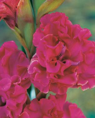 Sow seed in a light soil mix