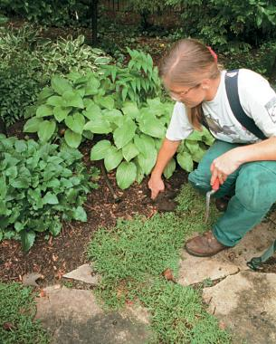 Check the soil at the bottom of a hole each day until it's warm and dry to determine how many days can elapse without watering your garden. Soil that's cool and wet to the touch is well watered. Photo/Illustration: Todd Meier