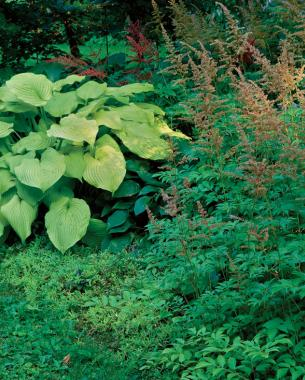 tightly planted plants dont allow for weeds to grow