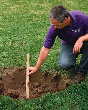 dig a planting hole