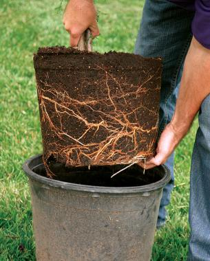 Planting The Right Way Finegardening