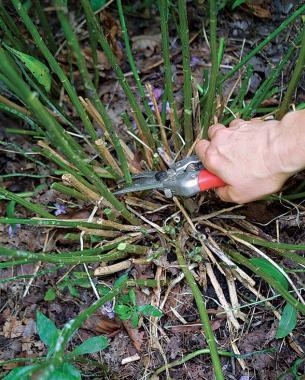 10. Đừng chen chúc thực vật