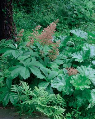Dynamic Foliage For Partial Shade
