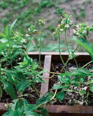 little plants planted in fertilizer