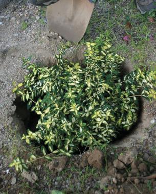 a dug hole with a plant inside it