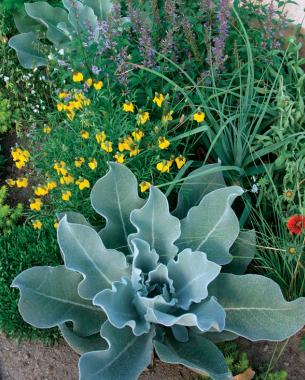 In front of the fence are xeric areas devoted to plants that like it dry. Photo/Illustration: Michelle Gervais