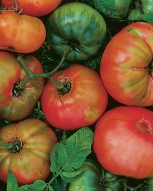 "Tomato /""Prunes/"" Siberian Garden"