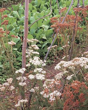 nectar-bearing plants