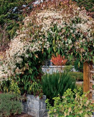 Fragrant Plants For Pathways Finegardening