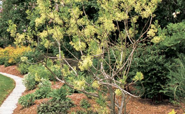 Mulch For A Healthy Garden Finegardening