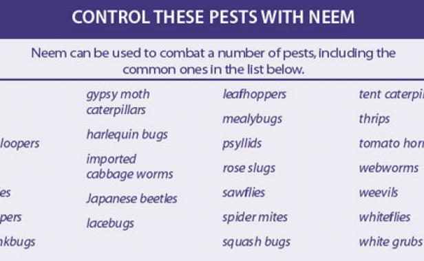 Control Pests and Diseases Safely with Neem - FineGardening