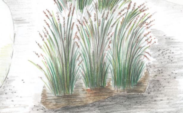 five pleasing number of plants