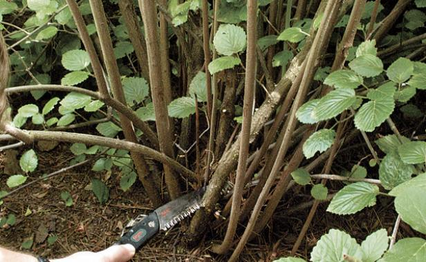 crowded stems pruning