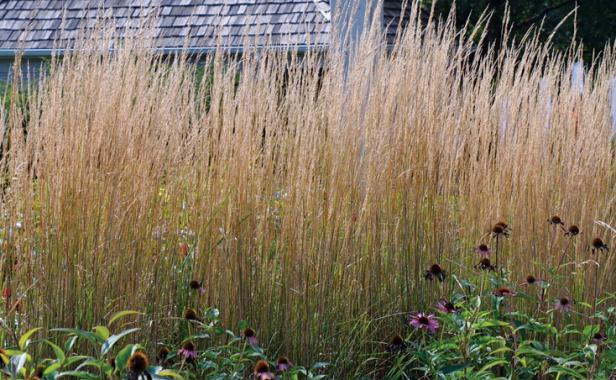 Designing with Grasses - FineGardening