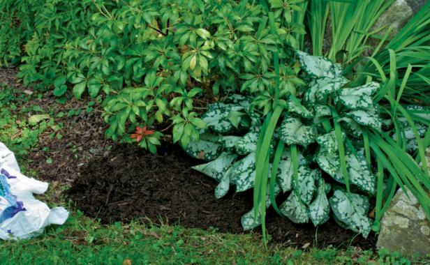 Six Tips For Effective Weed Control Finegardening