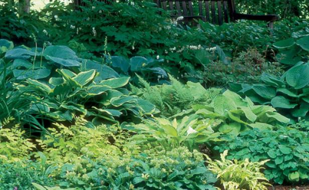 Designing With Hostas Finegardening