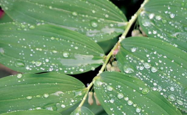 leaves with dew on them