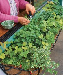 Herbs For Every Window Box