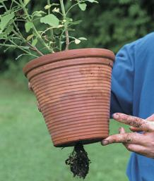 How to Repot Container Plants - FineGardening