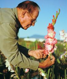 How to breed Gladiolus hybrids